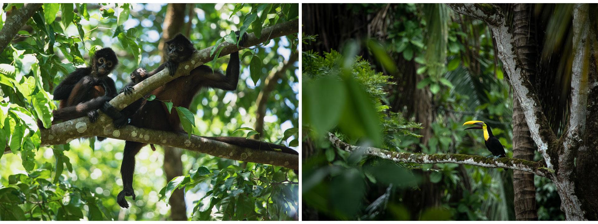 toucan-singe-costa-rica